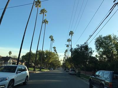 Pasadena Halloween street