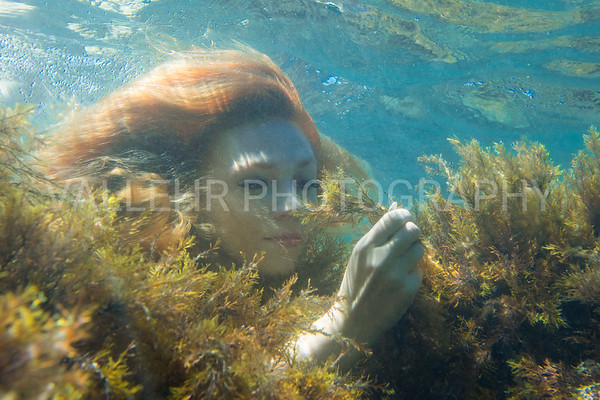 PLUCKING SEAWEEDS