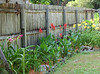 Garden along side yard fence line.