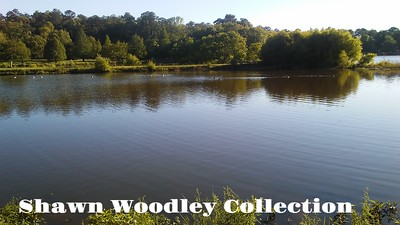 Shawn Woodley Collection