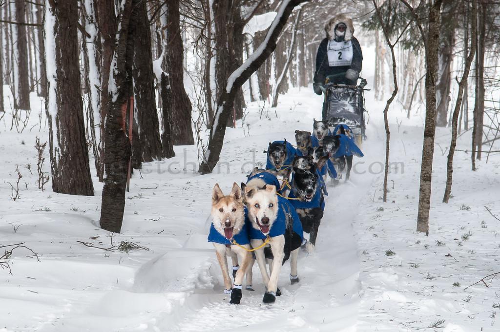UP200 Dogsled Race @ Grand Marais, MI