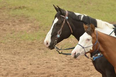 UP Cowboy Sunday speed 529
