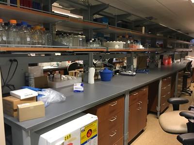 Dr. Friedlander lab