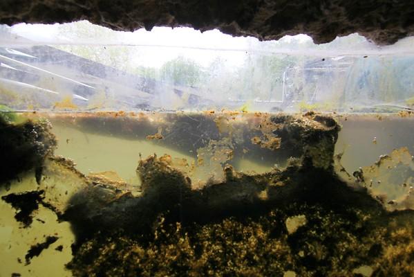 Aqua-zoo (05/2016)