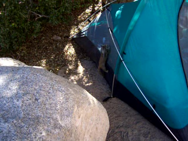 VIDEO - Squirrels & other rodents were constantly raiding our camp, testing it for weaknesses.  This squirrel eventually succeeded in chewing a hole in Blake's tent and helped himself to the buffet.