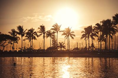 Waikiki Palms