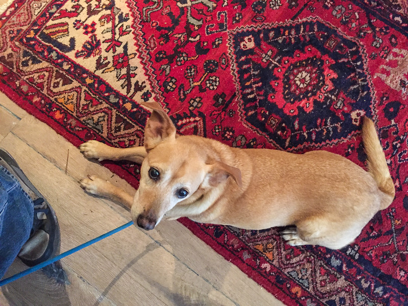 Dog-friendly Wine tasting on the Carmel Wine Walk: Windy Oaks Winery