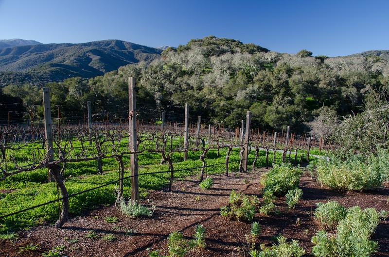 Rolling hills of Holman Ranch, Carmel Valley wine tasting in California