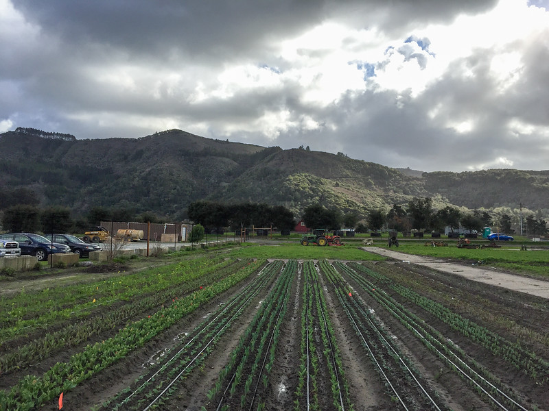 Things to do in Carmel California | Stop at the Earthbound Farms farm stand
