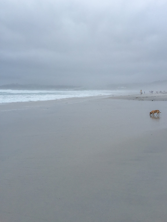 A foggy afternoon on the Carmel Beach - Things to do in Carmel, California
