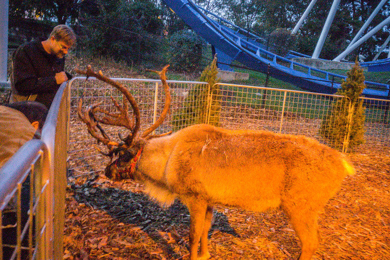 Santa's Reindeer at Great America's Winterfest