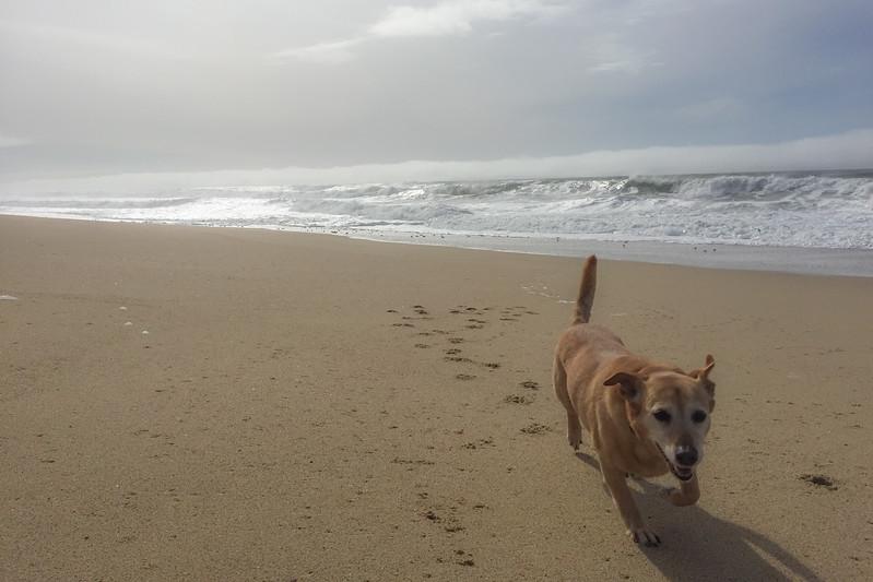 Dog-Friendly Beach in Half Moon Bay, CA