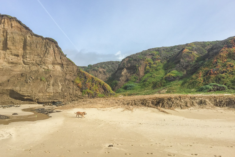 A Dog-friendly Beach in Half Moon Bay, CA