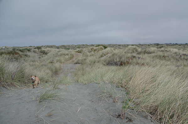 The dog-friendly Samoa Sand Dunes | Things to do in Humboldt County
