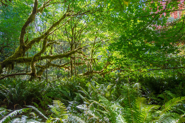 The Tall Trees Grove in Redwood National Park | Things to do in Humboldt County