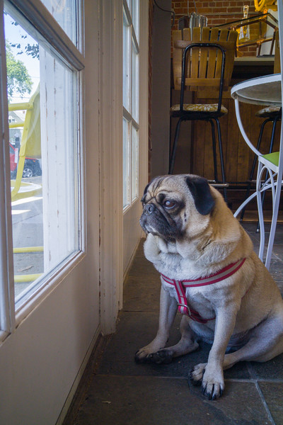The watchdog at Scout Living Vintage | One Day in Sacramento