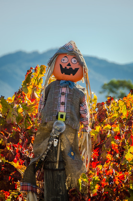 Vineyards decorated for Halloween | Fall colors in Sonoma Wine Country