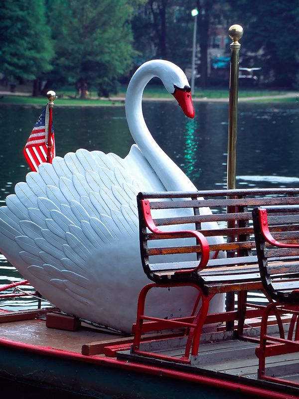 One of Boston's famous Swan Boats