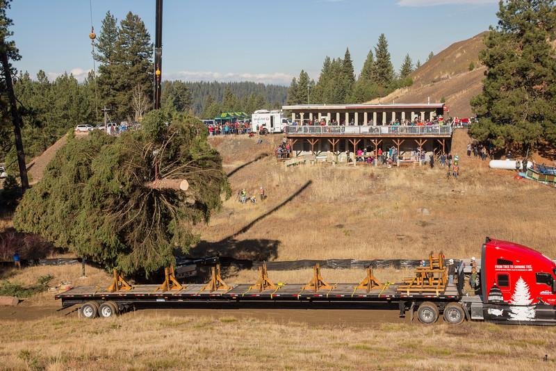U.S. Capitol Christmas Tree. Payette National Forest, Idaho, 2016