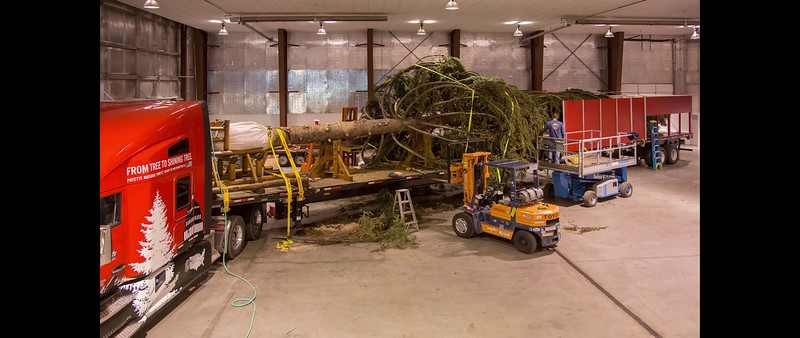 Wrapping the Tree - Inside the Hangar, Nov. 3-5
