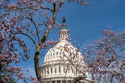 Capitol in Spring 3