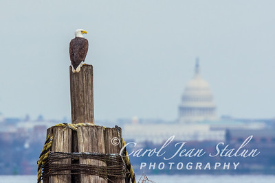 Eagle Eye on Capitol 1