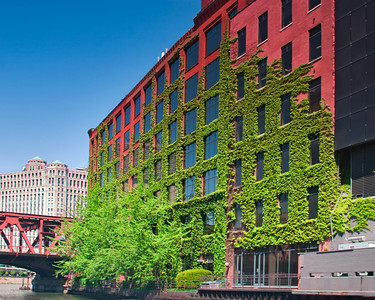Ivy Covered Building along the Chicago River