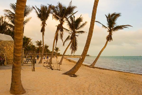Palm Trees on a Key West Beach