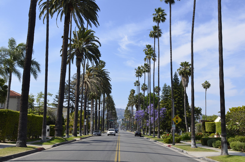 palm trees in Los Angeles, California, by Clemens Sehi