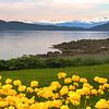 Juneau Alaska, Jensen-Olson Arboretum