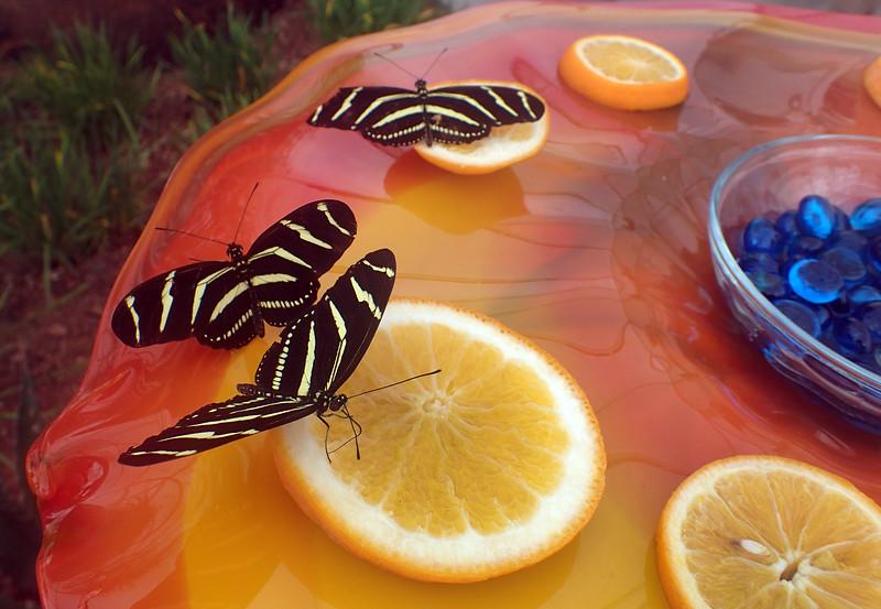 Arizona, Scottsdale, Desert Botanical Garden, Butterfly Wings Exhibit
