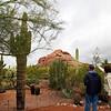 Arizona, Scottsdale, Desert Botanical Garden
