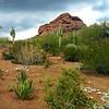 Arizona, Scottsdale, Desert Landscape