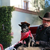 Arizona, Scottsdale, Old Town, Carriage Driver