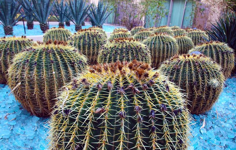 Arizona, Scottsdale, W Scottsdale, Cactus Garden