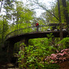Hot Springs Arkansas, Garvan Woodland Gardens, Photographer on Bridge