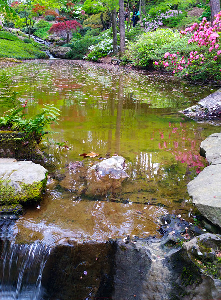 Hot Springs Arkansas, Garvan Woodland Gardens, Reflections in Pond