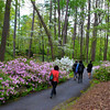 Hot Springs Arkansas, Garvan Woodland Gardens, Strolling Through Azalea Gardens