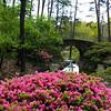 Hot Springs Arkansas, Garvan Woodland Gardens, Picturesque Bridge with Azaleas in Foreground
