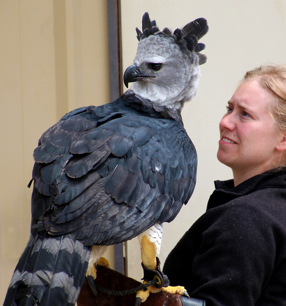 Boise World Center for Birds of Prey, Harpy Eagle with Trainer