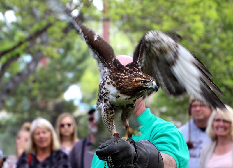 Boise World Center for Birds of Prey
