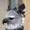 Boise World Center for Birds of Prey, Harpy Eagle Portrait