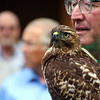 Boise World Center for Birds of Prey, red tail hawk