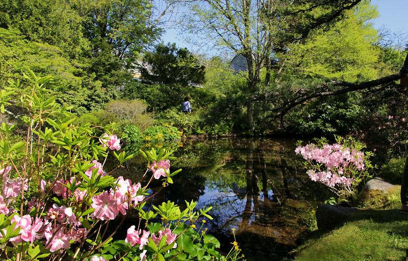 Asticou Gardens, Northeast Harbor, Maine