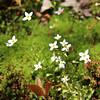 Acadia National Park, Wildflowers