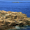 Acadia National Park, Rocky Outcropping