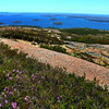 Acadia National Park, View over Harbor with Flowers