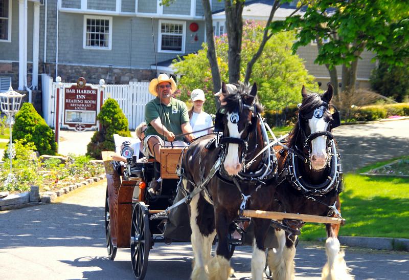 Bar Harbor Maine, Horse-Drawn Carriage