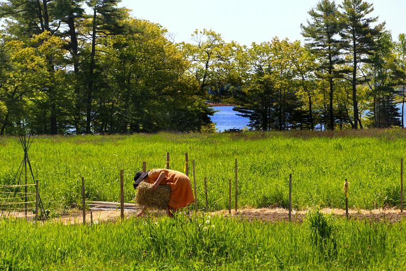 Freeport Maine, Wolf's Neck Farm Planting Seeds