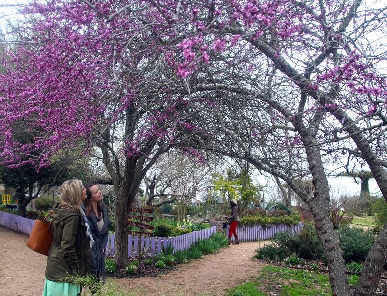 Brenham-Washington County Texas, Antique Rose Emporium
